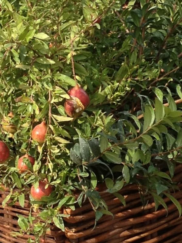 pici-e-castagne-aromaticus-19