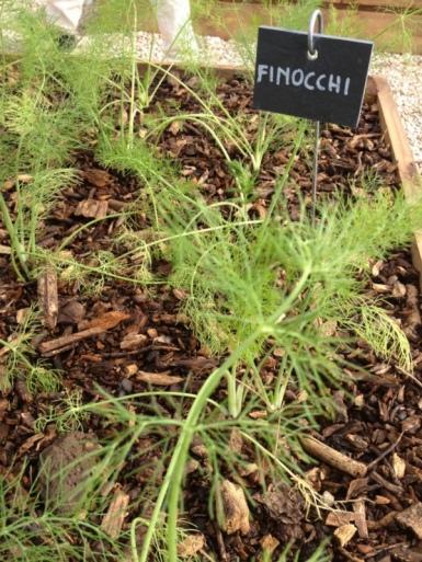 pici-e-castagne-aromaticus-23